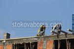 изграждане на покривни конструкции по поръчка