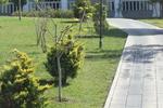 озеленяване на обществени пространства